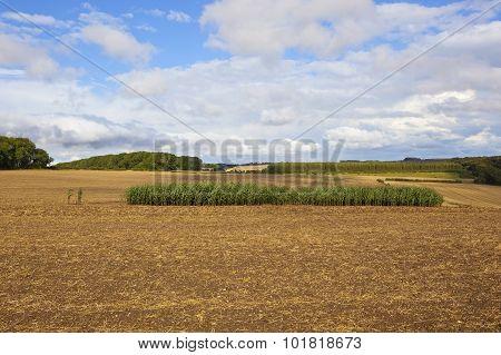 Maize Strip