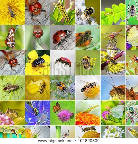 Insects. A collage of photos of insects found in Siberia