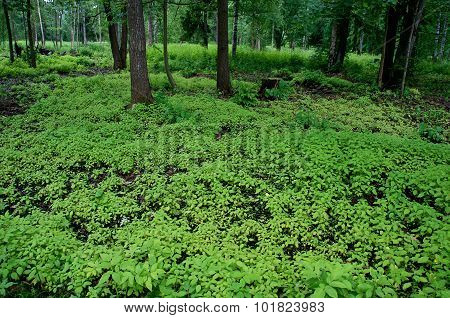 orest and small plants on the ground in Gatchina. St. Petersburg. Russia