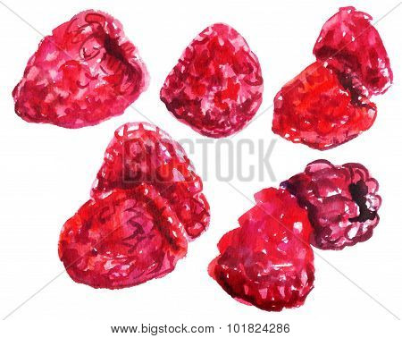 Watercolour drawings of fresh raspberries on white background