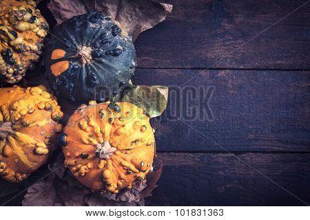 Autumn Concept With Pumpkins