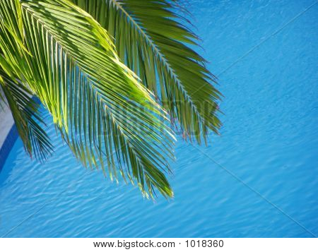 Palm Leaves Over Pool