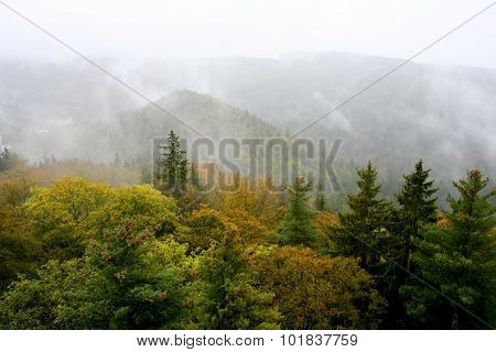 Top view of autumn forest