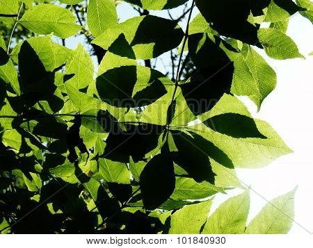 dappled light through leaves countryside nature growth