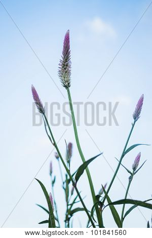 Vintage Flower Plant At Sunset