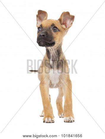 One Cute Mixed Breed Puppy