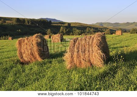Beautiful haystacks on green lawn in the mountains.