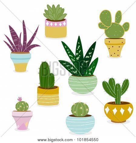 Cactus and succulent plants in pots.