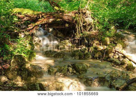 Creek in the summer sun