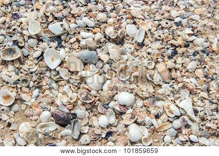 Fossil Shell On Beach
