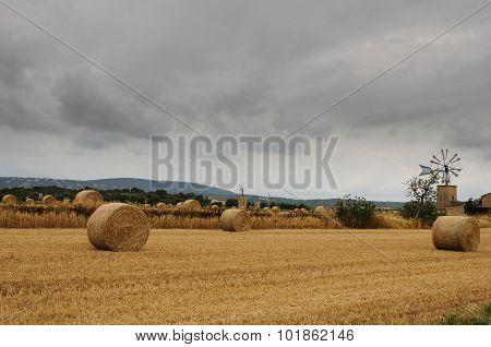 Mowing wheat field