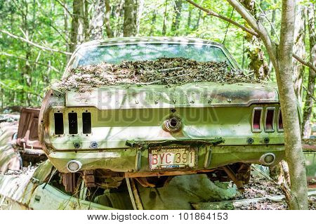Green Mustang In Green Forest