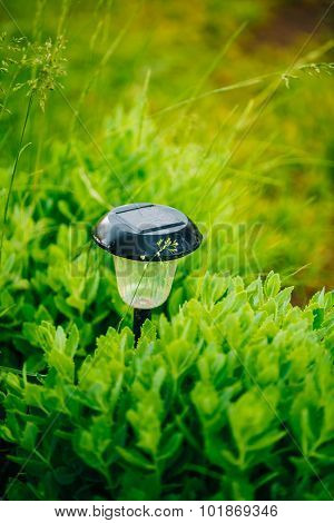 Garden Design. Solar Powered Lamp. Small Solar Garden Light, Lan