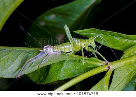 The Birth Of A Grasshopper