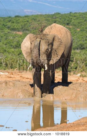 Male Elephant Drinking Water