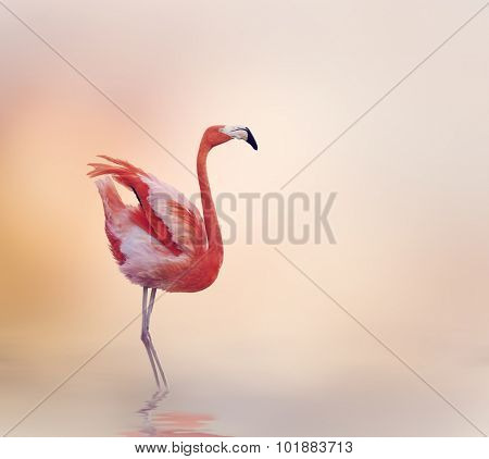 Pink Flamingo Walking at Sunset