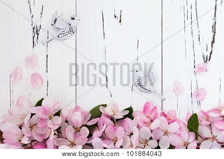Spring apple blossom with pair birds on old vintage wooden background. Top view