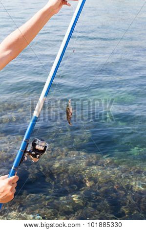 fish hooked on a hook against the sea