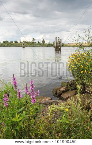 Colorful Blooming Wild Plants On The River Banks