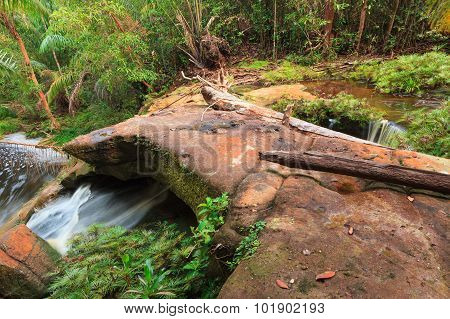 Small stream in jungle