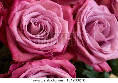 Bunch Of Crimson Roses