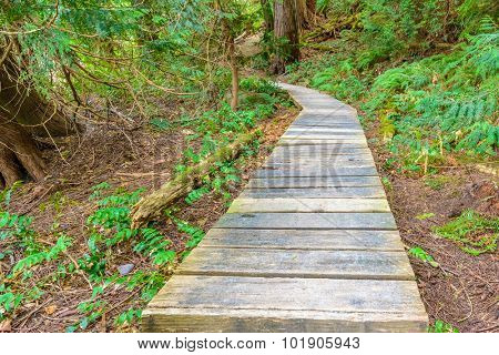 Forest trail scenic for vacations and summer getaways. Sandwell Park Trail at Gabriola Island, BC, Canada.