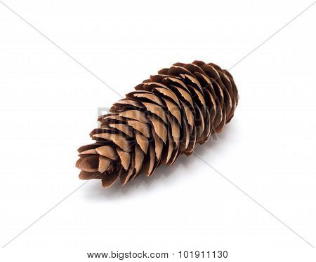 Pine Tree Cone Isolated On White
