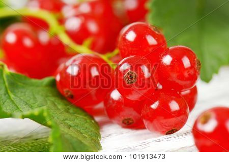 macro detail of glossy red currant balls in clusters
