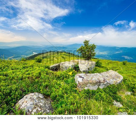 Tree And Boulders On Hillside Meadow In Mountain At Sunrise