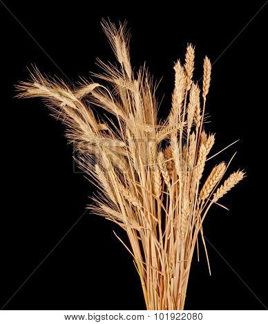 wisp of wheat and rye
