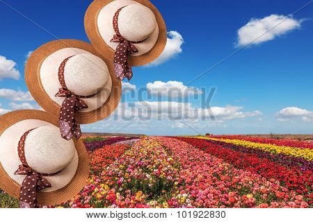 Beautiful elegant wide-brimmed hats decorated with spring landscape. Bright colorful blooming field of buttercups