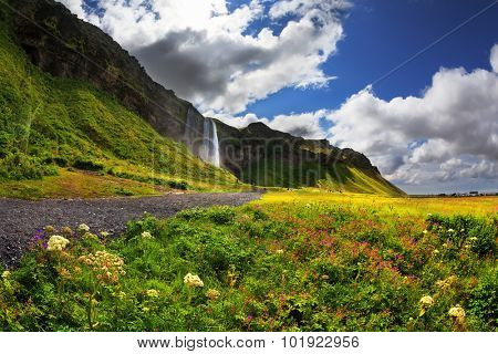 Beautiful summer day in Iceland. Wonderful flowering fields and streams in the vicinity of the falls Selyalandfoss