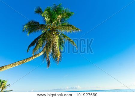 Sea View Scene