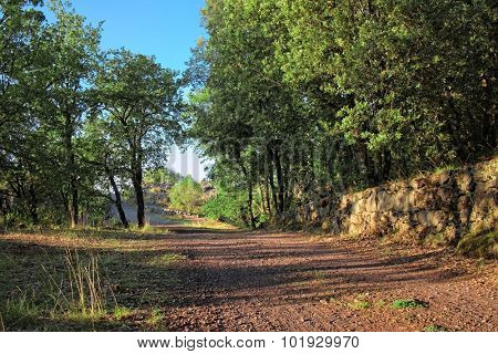 path in the oak forest of Etna Park, Sicily