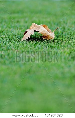Fallen Leave On A Soccer Field