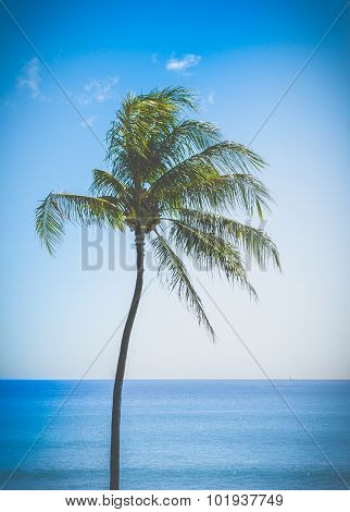 Retro Single Palm Tree In Hawaii