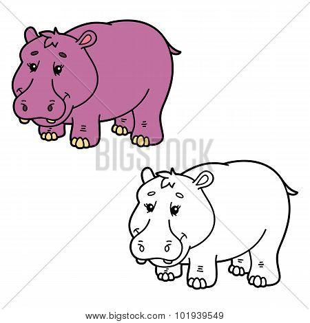funny hippopotamus.