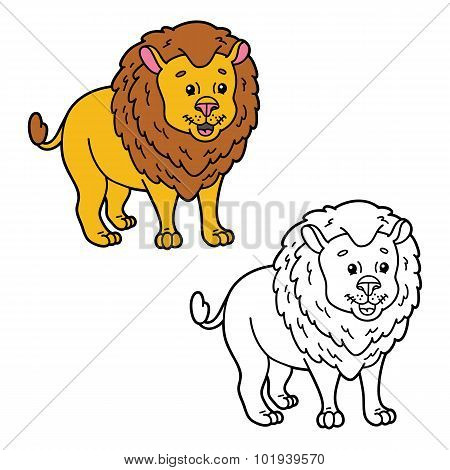 funny lion.