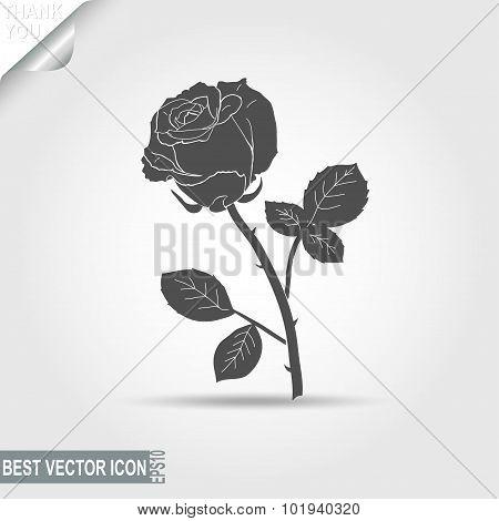 rose - vector illustration