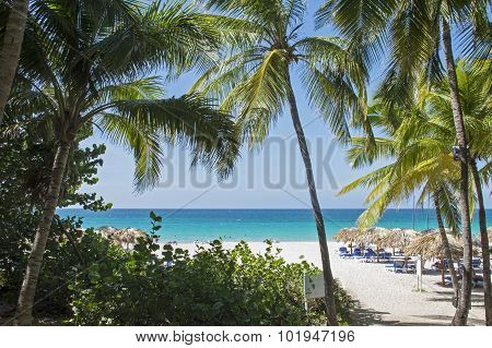 Tropical Resort Beach In Cuba
