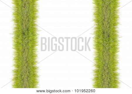 Grass pattern texture and background.