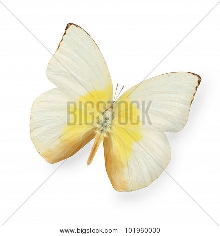 Yellow and beige butterfly isolated on white