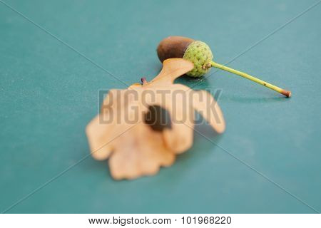 acorn and leaf on a blue background