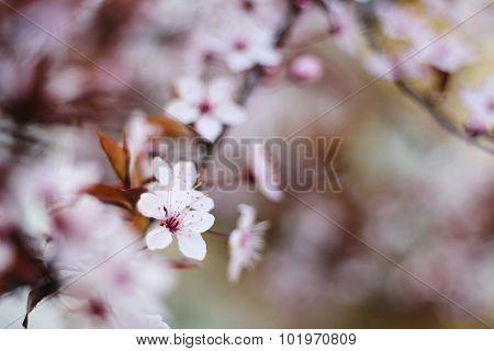 White flower on autumn day