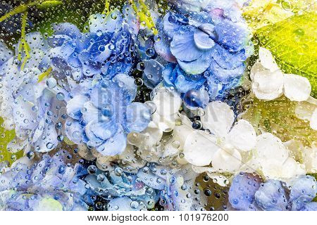 Flowers Under Water Drops Background