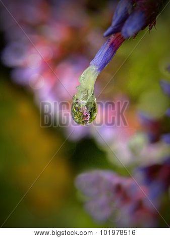 Statice flower reflection