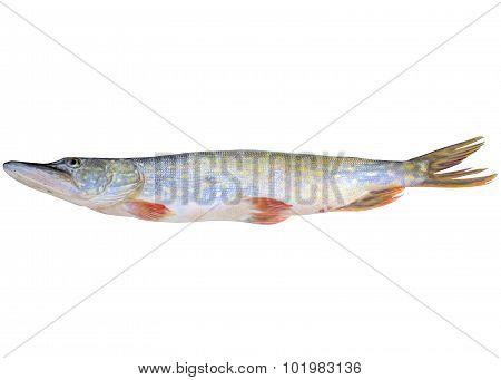 Fish Pike.