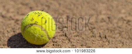Flock of ants sticking round tennis ball