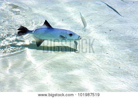 Fish   Isla Contoy          Mexico