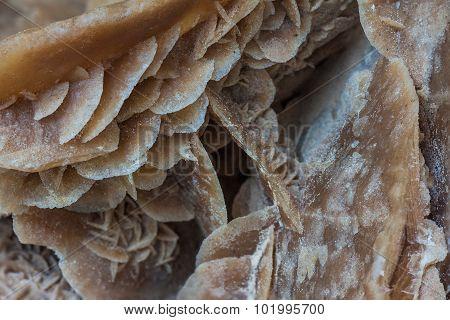 Close Up Of Desert Rose